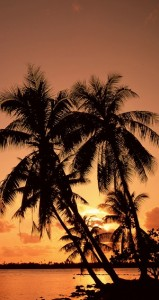 Palm Trees at Sunset in Florida